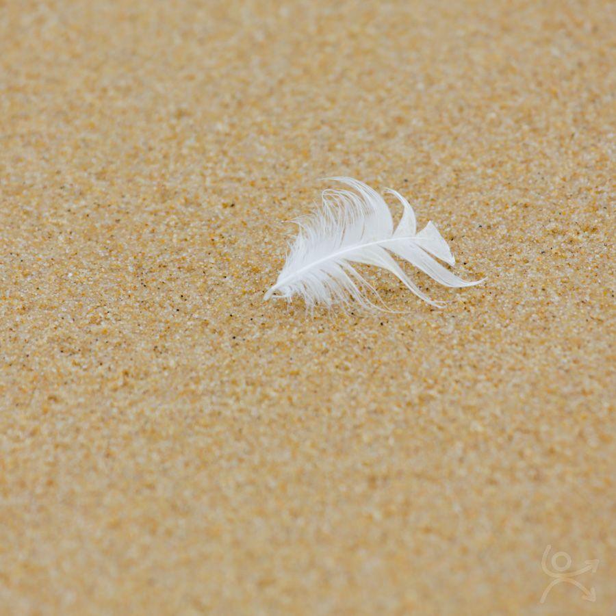 Plume et sable